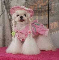 Boutique Para Perros Moda De Lujo Canina